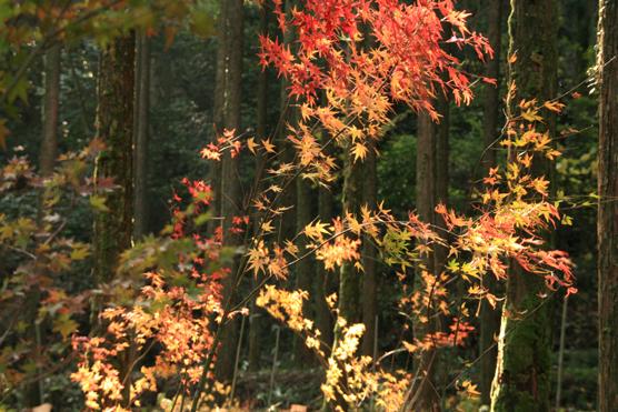 悠久の森風景