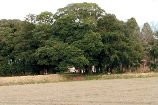 早馬神社の杜