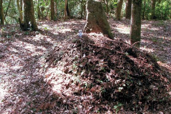 西南の役薩軍の墓