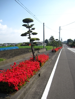 2013.4.10:上町の街路-01.JPG